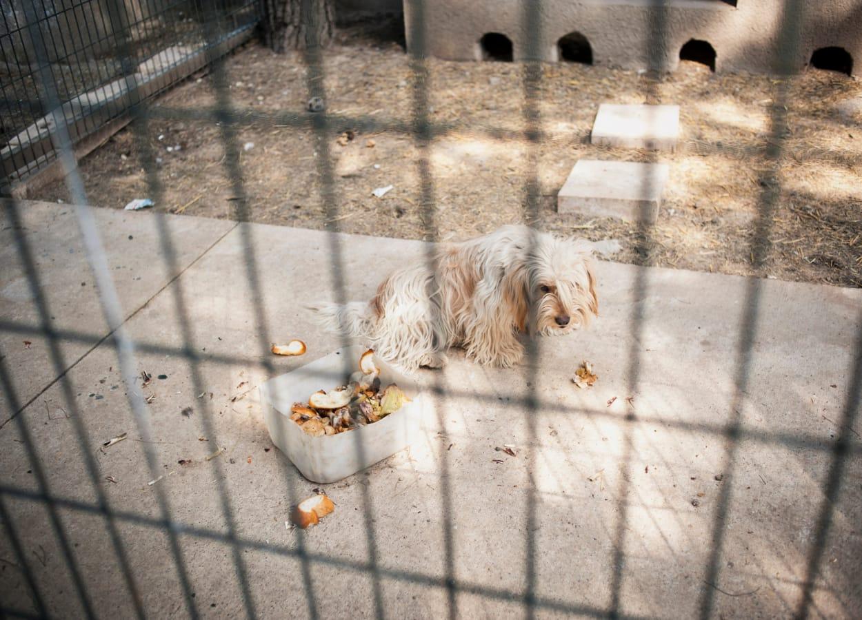 Em setembro do ano passado, inovou-se a lei que trata de abandono e maus-tratos aos animais